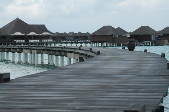 Coco Bodu Hithi: Awesome Place