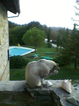 Agriturismo Valdichiascio: il gatto sà che i pesci non sono in piscina