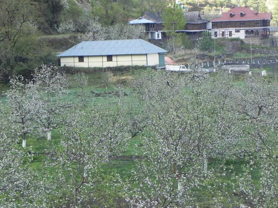The Srikhand (HPTDC) : Blossomed apple trees