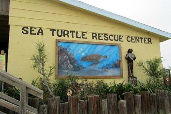 Sea Turtle, Inc.: Great place to take the kids and educate them about sea turtles