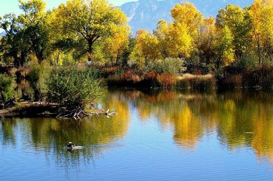 Rio Grande Nature Center State Park: Fall in NM
