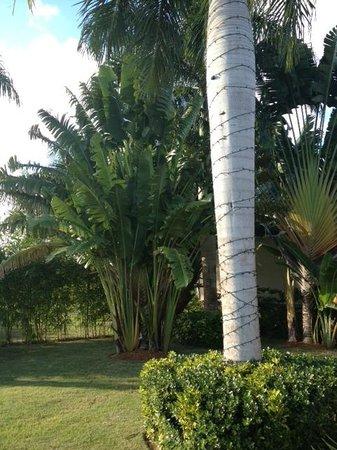 Casa de Campo Resort & Villas: Lawn At Villa