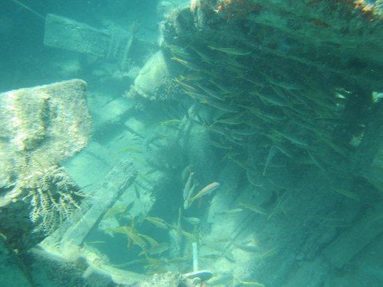 Galleon Beach : The shipwreck