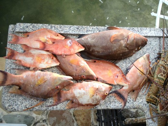 Surfside, FL: Hogfish Heaven!