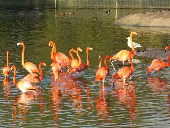 Blackpool Zoo: Beautiful flamingos in Orange