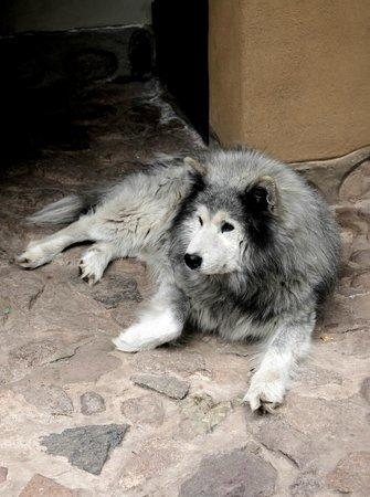 Kuychi Rumi: Una de las mascotas y se llama Oke
