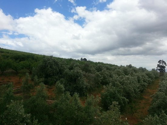 Overture at Hidden Valley : The olive groves behind the restaurant