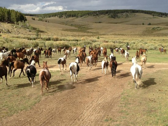 Paradise Guest Ranch: Turning the horses out to pasture.