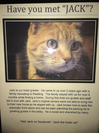 Fairfield Inn & Suites Redding : Jack Cat - Description