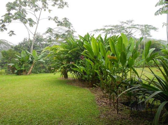 Volcano Lodge & Springs: Room garden