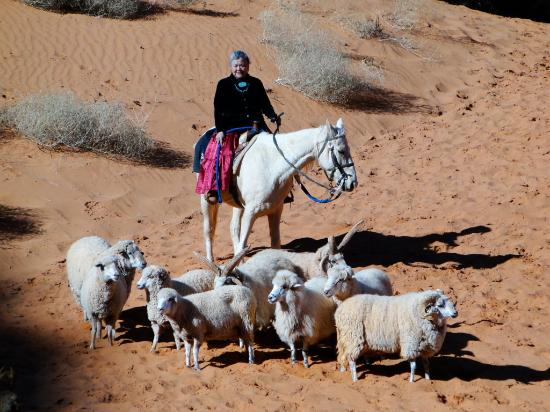 Goulding's Lodge & Campground: Photo Op of the Running of the Sheep