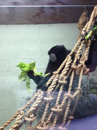 Dublin Zoo: Hungry Monkies