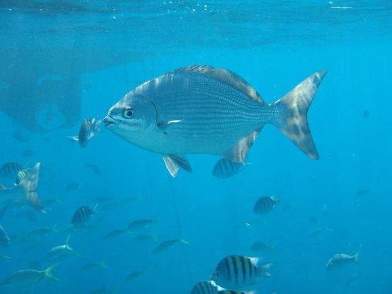 Spirit Snorkeling: Bunch of fish near boat