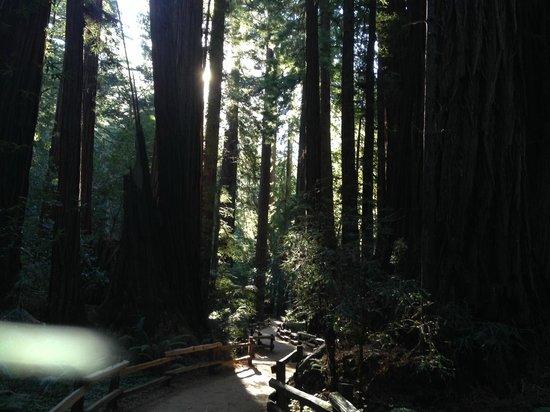 The Urban Safari: Muir Woods