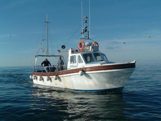 Fishnewquay