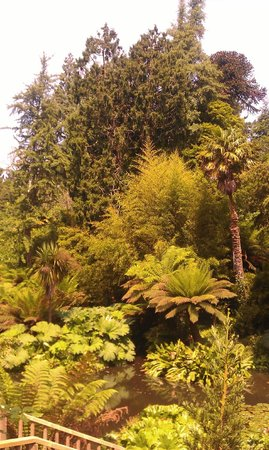 The Lost Gardens of Heligan: Heligan Jungle