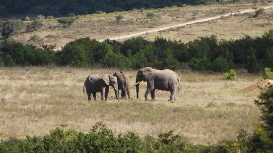 Pumba Private Game Reserve: Fantastic