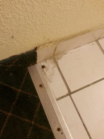 Economy Inn: Dirt and a dead bug in the sink area