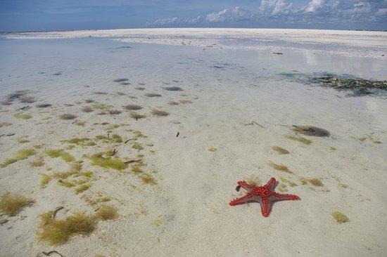 Jacaranda Beach Resort: Il mare di fronte al Jacaranda durante la bassa marea