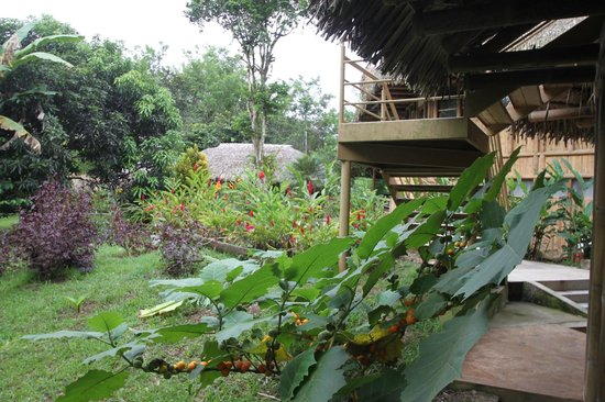 La Selva Amazon Ecolodge : View Next to Room