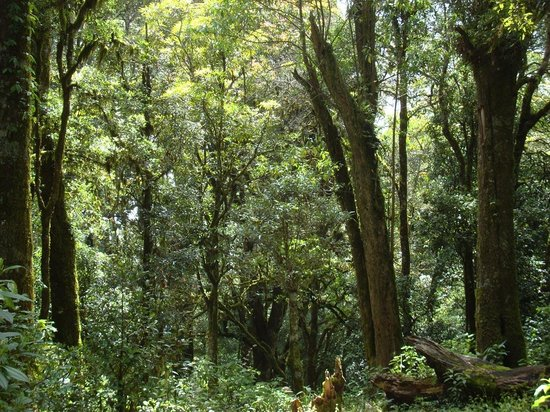 Huitepec Ecological Reserve: Eichenwald auf dem Huitepec