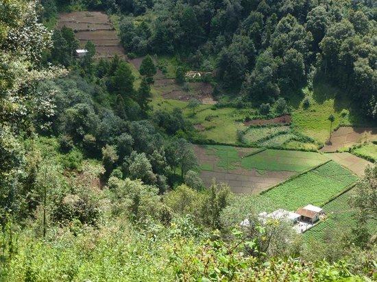 Huitepec Ecological Reserve: Blumenfelder am NW-Rand des Huitepec