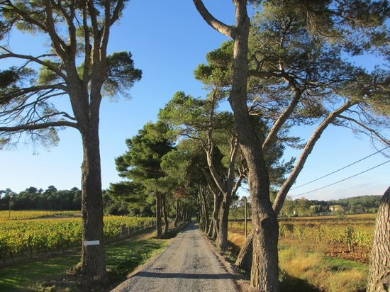 Chateau Canet: approach to the Chateau