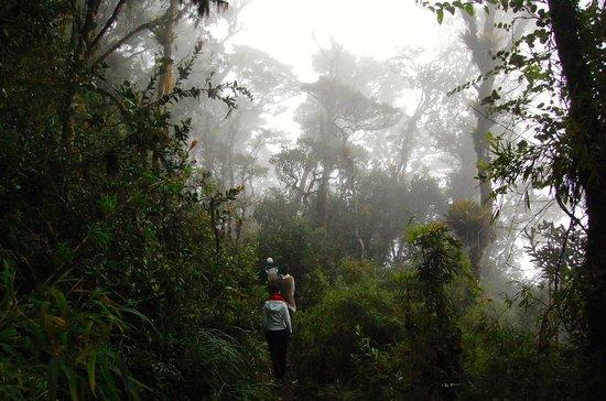 Bogotá, Kolumbien: Dentro de bosque de niebla