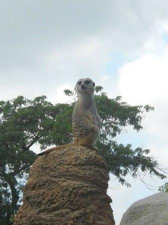 Racine Zoo: Meercat lookout