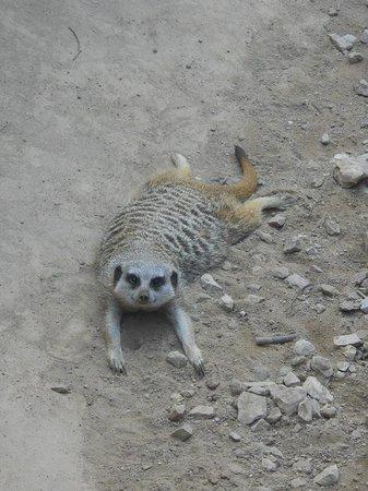 Racine Zoo: Lazy guy