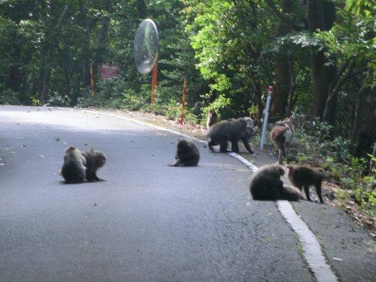 Seibu Trail : 林道で