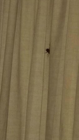 Grand Wailea - A Waldorf Astoria Resort: many guests complain of roaches inside
