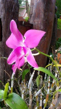 Santhiya Tree Koh Chang Resort: ดอกไม้ในสวน