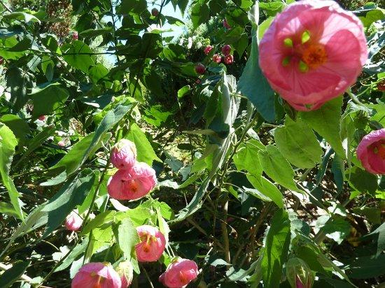 Andrea's Hidden Cottage: Amazing vines and garden
