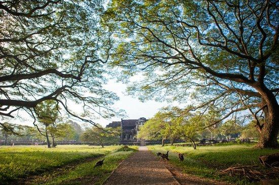 Angkor Pearl Hotel: Angkor Wat