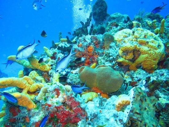 Plongee Grand Cozumel Diving : PSMLGC