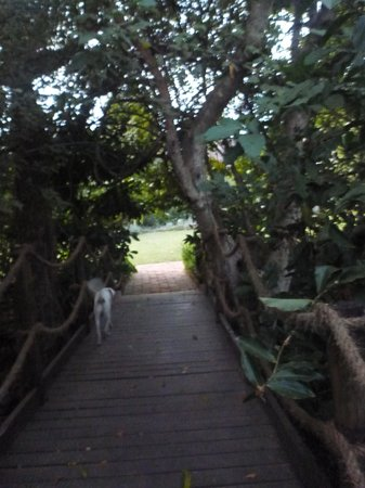 Shangazi House: the little walkway to the cottages