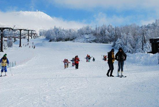 Sugadaira Kogen Ski Area : Skijyou