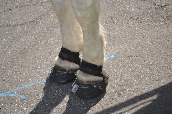Amelia Island Carriages: Horse sneakers!