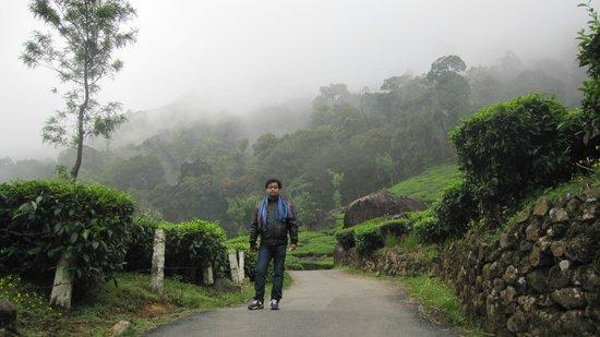 Pothamedu Viewpoint