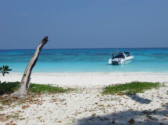 Ko Tachai Island: Пляж