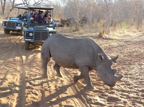 The Stanley and Livingstone: Visiting the rhinos early one morning