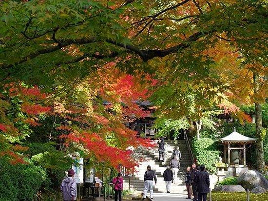 Daikozenji Temple: 様々なもみじの色が交じり合う大興善寺境内の風景