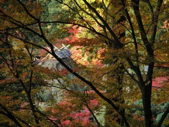 Daikozenji Temple: 契園内から茅葺屋根の大興善寺本堂を見下ろした光景