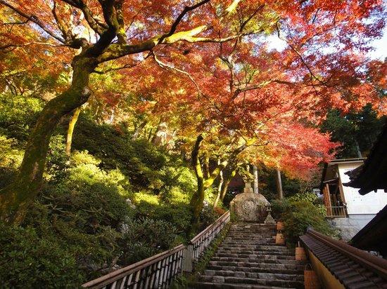 Kiyama-cho, Japan: 八万四千塔最初の塔周辺の紅葉