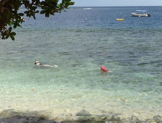Qamea Resort And Spa Fiji: Backyard Snorkelling