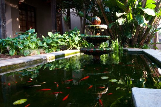 Singa Lodge: The koi pond