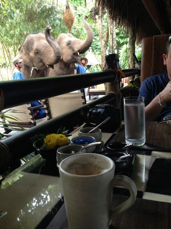 Four Seasons Tented Camp Golden Triangle : I'll have a Cappachino and a side of elephant.