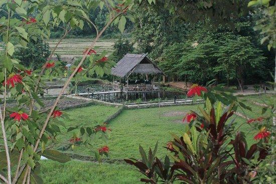 Kamu Lodge : Vue du bar depuis les lodges