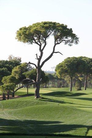 Maxx Royal Belek Golf Resort : parcours de golf